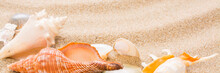 Seashell On The Beach. Summer ...
