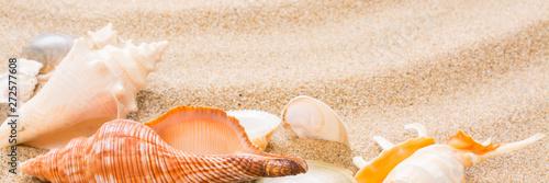 Obraz na plátně  Seashell on the beach