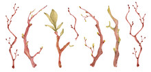 Sakura Branches With Green Leaves Watercolor Illustration. Blossom Petal Bouquet
