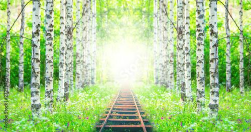 railway in the birch forest.