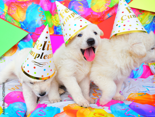 Obraz funny birthday cute dog puppies - fototapety do salonu