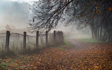 Misty Path In The Park On Early Foggy Autumn Morning. Old Fence,