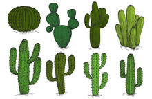 Hand Drawn Engraving Cactus Vector Set Isolated On White Background. Sketch Cactus Plant, Cacti Mexican Floral Illustration