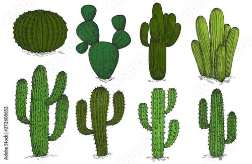 Fotografia Hand drawn engraving cactus vector set isolated on white background