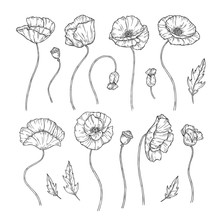 Poppy. Sketch Poppies Ornament Decor Wall Artwork Decorative Plant Poppy Flower Bud Planting Wallpaper Beautiful Vector Tattoo. Illustration Of Poppy Bud, Sketch Blooming Monochrome