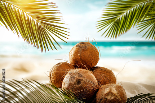 Foto auf AluDibond Palms Fresh coconuts on beach and summer time. green palms leaves and ocean landscape