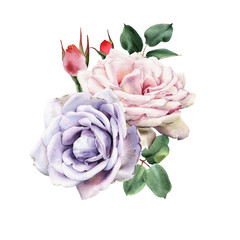 FototapetaBouquet of roses, watercolor, can be used as greeting card, invitation card for wedding, birthday and other holiday and summer background.