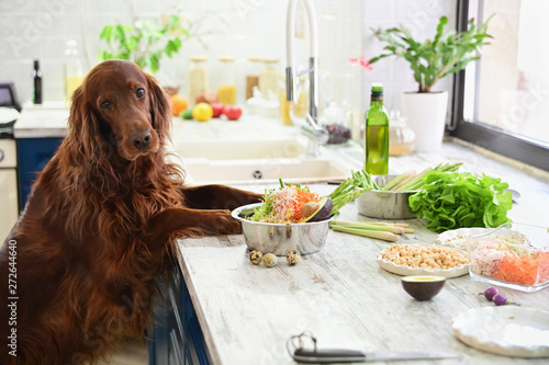 Autocollant pour porte Chien Cooking vegetarian food for pets. In the interior.