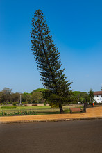 Tree Near Footpath