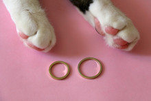 Gold Wedding Rings And Cute Cat Paws On Pink Background. Selective Focus.