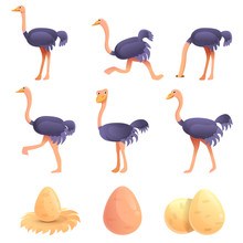 Ostrich Icons Set. Cartoon Set Of Ostrich Vector Icons For Web Design