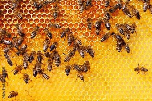 Bees on honeycomb Wallpaper Mural