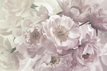 FototapetaVintage bouquet of beautiful garden flowers peonies. Pastel colors.