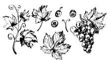 Set Of Grapes Leaves And Berries