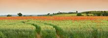 Spectacular Tuscany Spring Lan...
