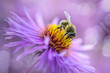 canvas print picture - bee on a purple flower