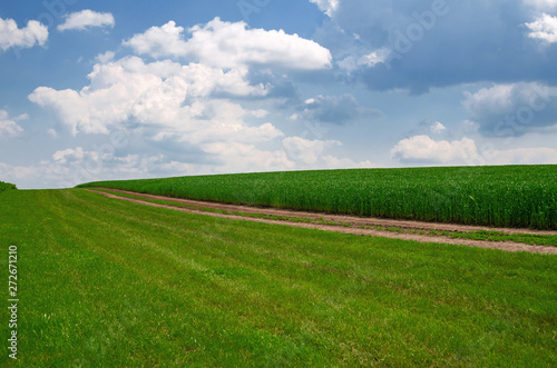 Field road near the field of young wheat. Agricultural concept