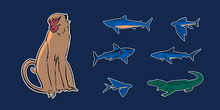 Hand Drawn Sketch Animal Set Illustration With Crocodile, Monkey, Flying Fish And Sharks. Vector Drawing Stickers Isolated On Navy Background
