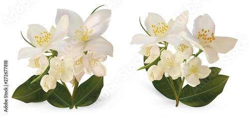 3d realistic white jasmine flowers on white background Wallpaper Mural