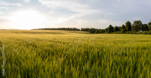 Beautiful crop field. summer sunset panorama around Fototapeta