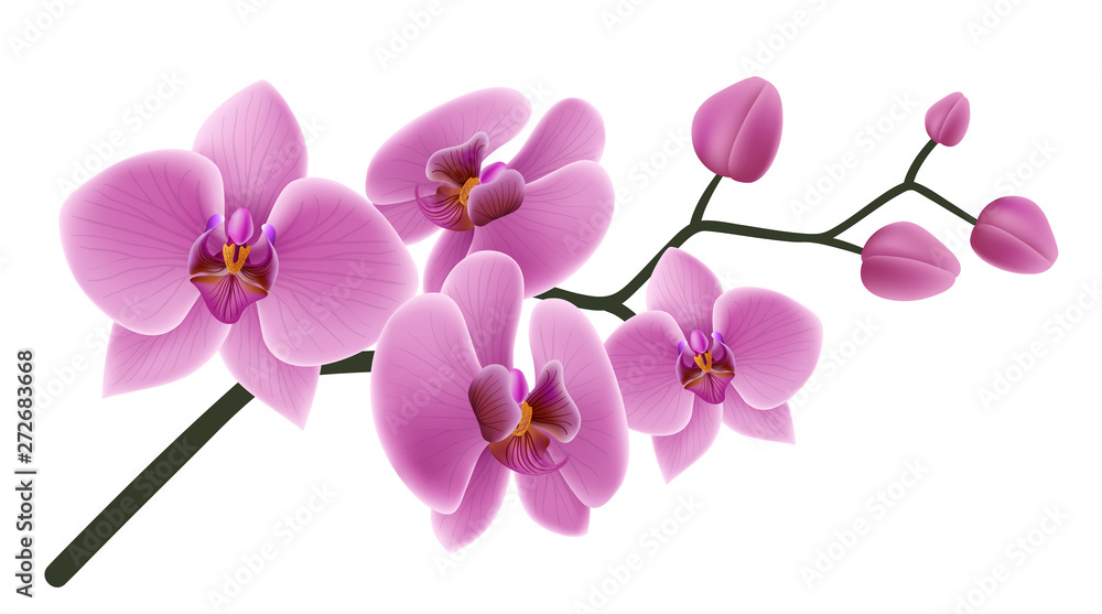 Fototapety, obrazy: Pink orchid flower branch with buds and flowers. Vector illustration isolated on white, for tropical design, romantic background or floral banner