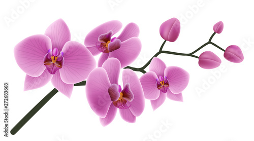 Fototapeta Pink orchid flower branch with buds and flowers. Vector illustration isolated on white, for tropical design, romantic background or floral banner  obraz