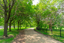 Shaded Green Path In Lincoln P...