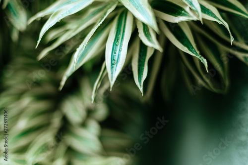 Poster Bamboe beautiful leaves background for wallpaper and backdrop