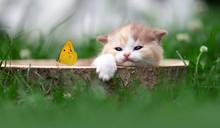 Kitten Mit Schmetterling Relaxt Im Garten
