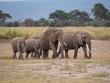 Elephants roaming in Amboseli National Park, Kenya