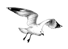 Hand Drawn Sketch Of Seagull I...