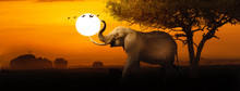 African Elephant Sunset Scene ...