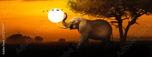 Spoed Foto op Canvas Olifant African Elephant Sunset Scene Web Banner