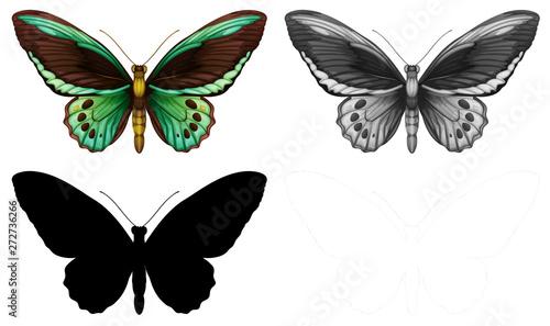 Fotografie, Obraz  Set of butterfly character