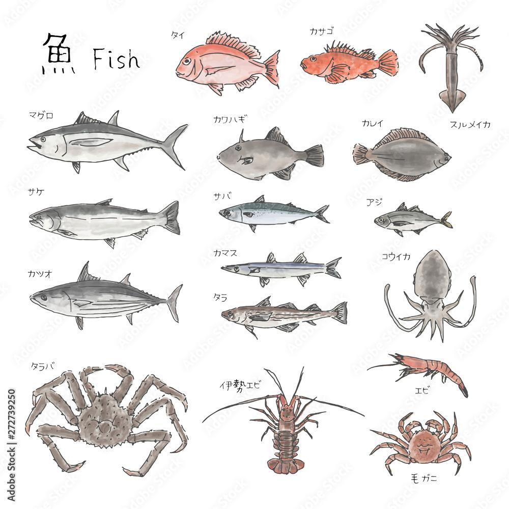 Fotografía 市場の魚 種類いろいろ 水彩風イラスト