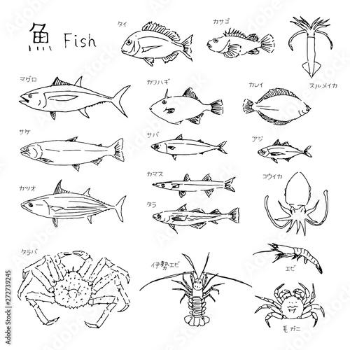 Fotografía 市場の魚 種類いろいろ 線画イラスト