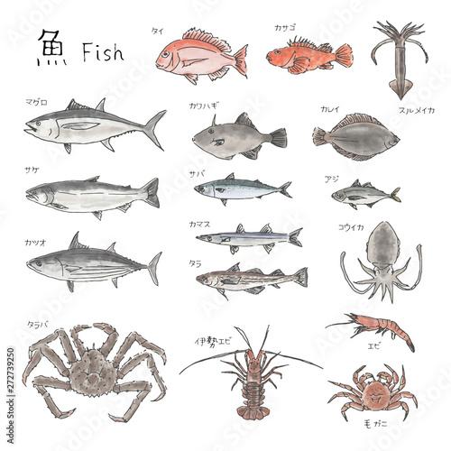 Cuadros en Lienzo 市場の魚 種類いろいろ 水彩風イラスト