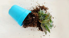 A Succulent Plant And Soil Spi...