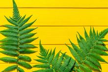 Tropical Summer Fern Branch Is...
