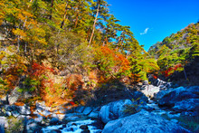 紅葉シーズンの山梨、甲府市にある昇仙峡の渓谷