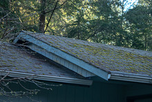 Mossy Green Growth On Roof Lin...