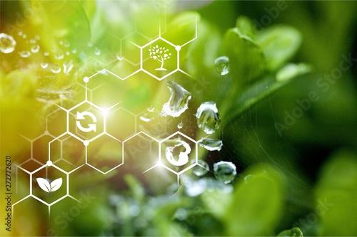 Poster Planten Biology.