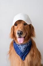 Cute Golden Retriever Wearing A Baseball Cap