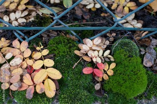 musgo, hojas y valla en otono