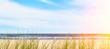 sandstrand mit dünengras unscharfer hintergrund