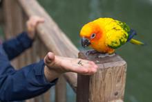 Cute Sun Conure Parrot On Bran...