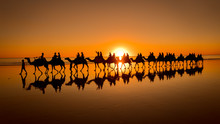 Sunset Camel Ride In Broome, Western Australia