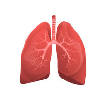 Human Lungs Realistic Medicine...
