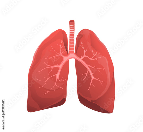Obraz Human lungs realistic medicine flat vector illustration - fototapety do salonu