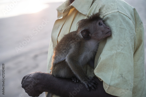 Beautiful little monkey in the hands of his master Canvas Print